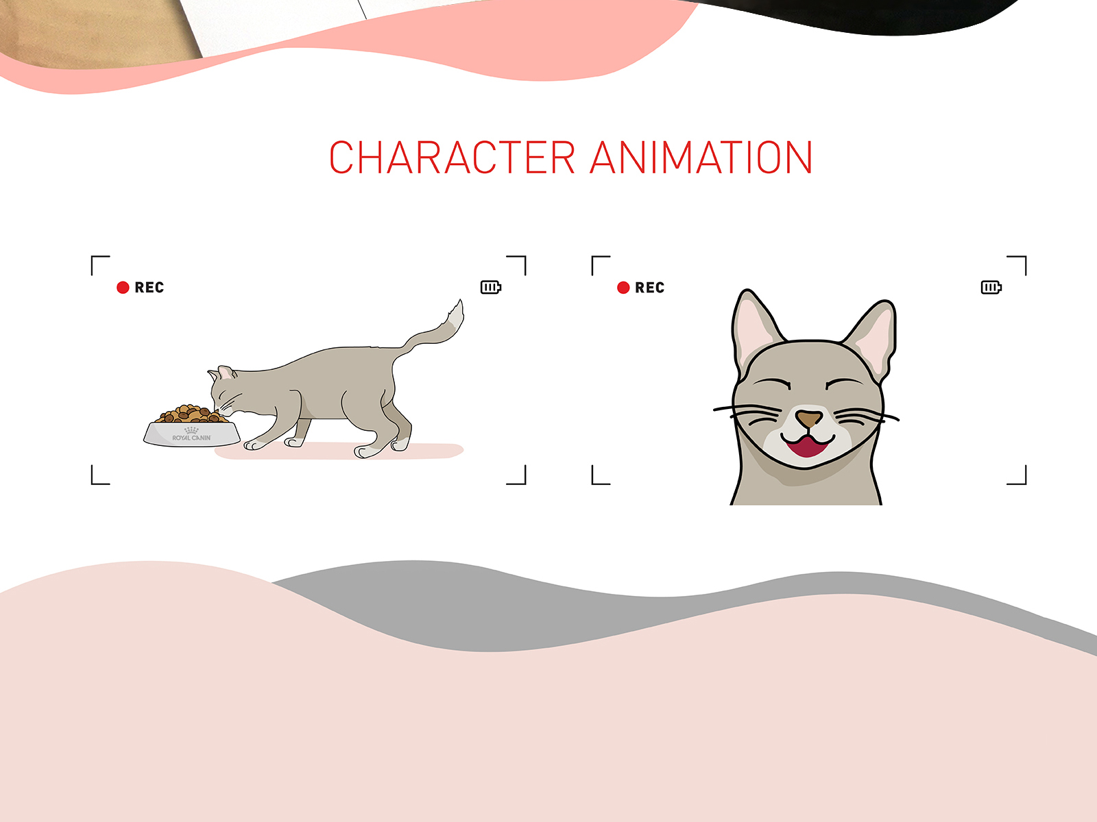 Royal Canin wet food promotional video illustration of cat animation