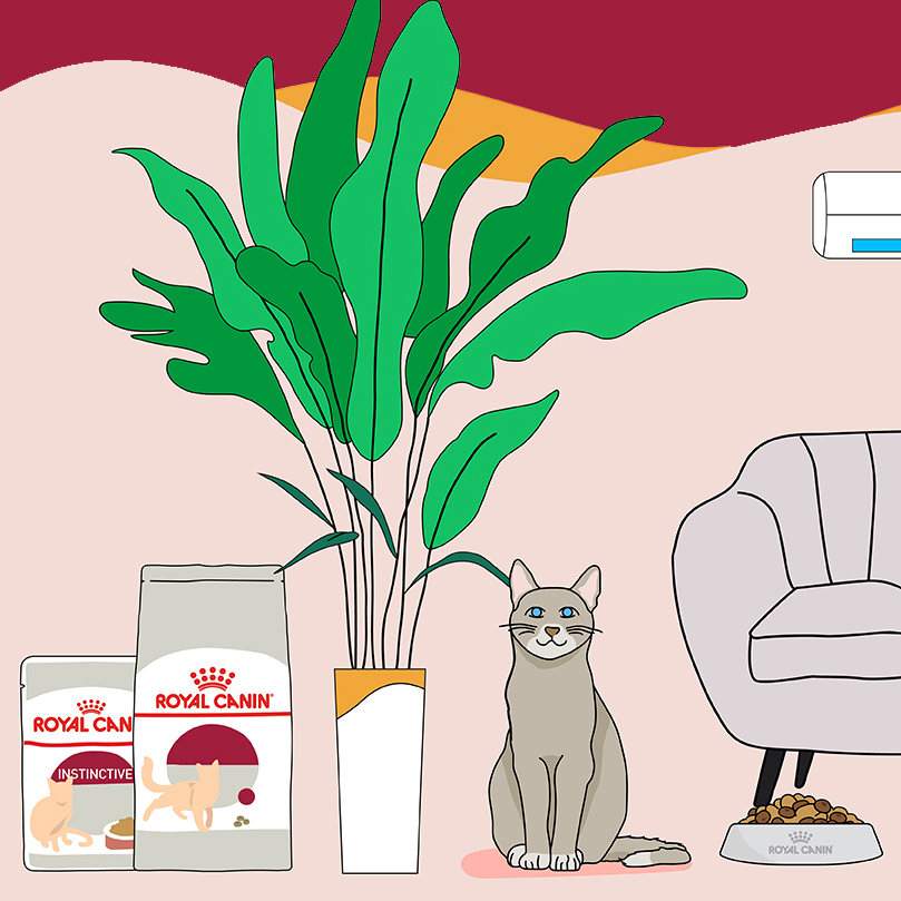 Royal Canin wet food promotional video scene of cat by the sofa and plant with wet food packaging.